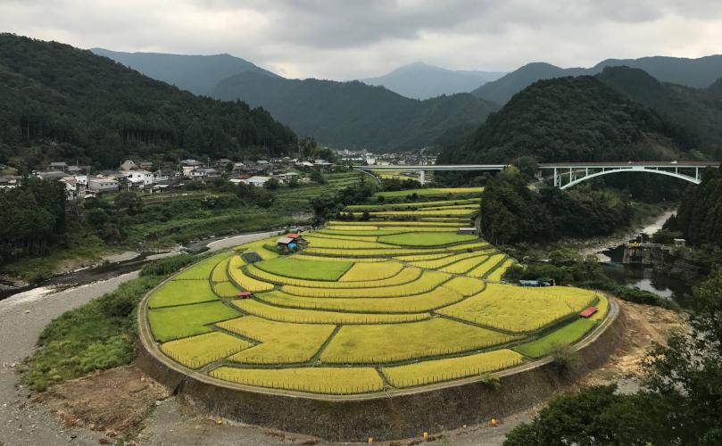 日本の棚田100選に選ばれたあらぎ島(和歌山県有田川町)